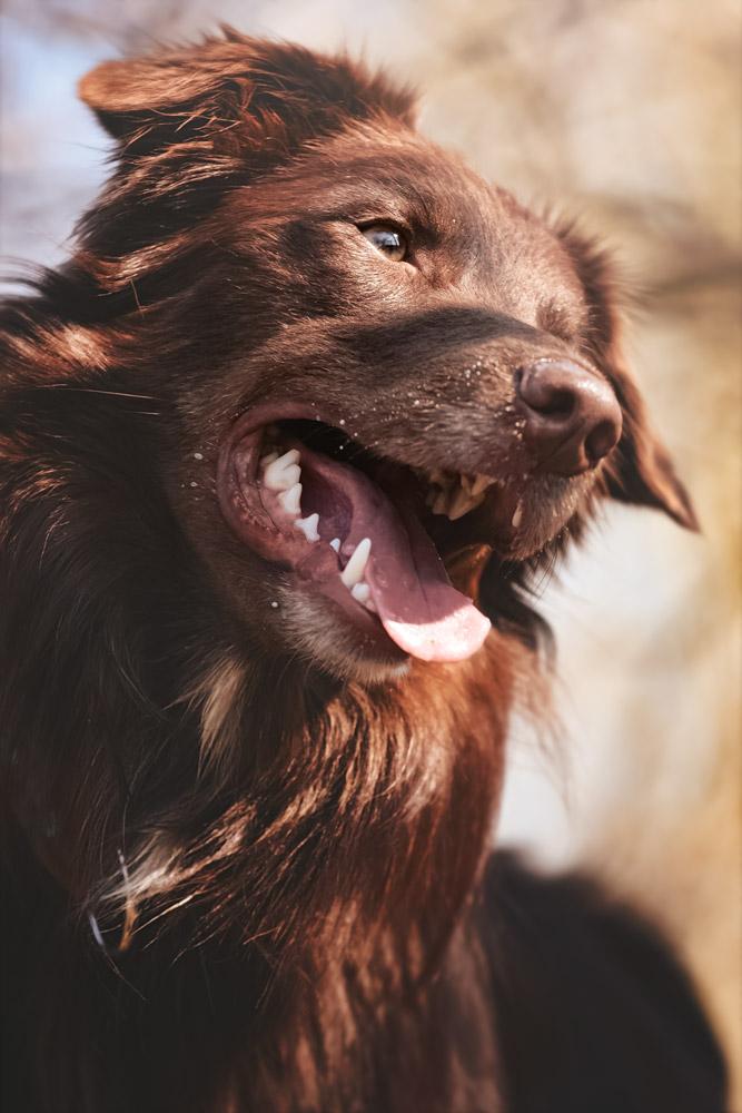 © Anja Kiefer | Hundeimpressionen
